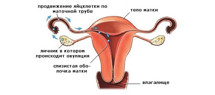 Позы в которых лучше заниматься сексом при беременности