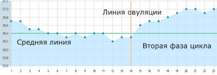 Средняя базальная температура для выявления овуляции, чтобы забеременеть