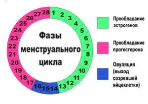 Возможный овуляционный календарь, чтобы быстро забеременеть
