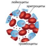 Снижение лейкоцитов в крови у женщин - что означает?