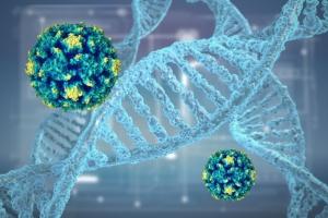 Вирус папилломы человека у женщин: симптомы и признаки развития заболевания