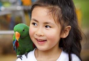 Домашние животные и ребенок - в чем заключается опасность