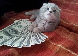 Животные и растения в вашем доме, привлекающие финансы и денежную удачу